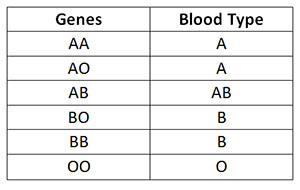Theme simply abo blood group genetics necessary words