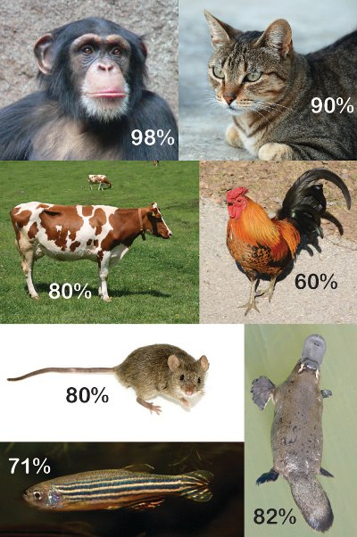 Genetic Similarity Between Dogs And Cats