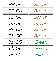 Given all this, here are the possible gene combinations that can give you  brown, green, or blue eyes: