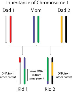 Mix and match dna saves the day
