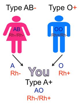 Here The Female Biological Parent Is AB Negative And Male O Positive Has An A Allele B For Her ABO Gene Two Negatives