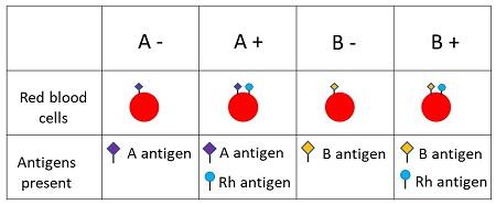 Understanding Genetics